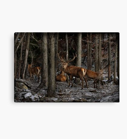 Elk in the Forest Canvas Print