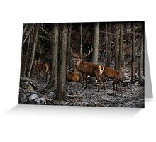 Elk in the Forest Greeting Card
