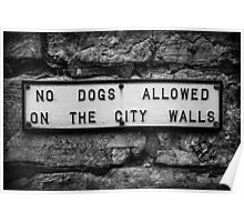 No Dogs Allowed on the City Walls Poster
