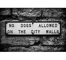 No Dogs Allowed on the City Walls Photographic Print
