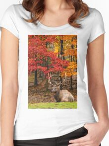 Bull Elk In Autumn Forest Women's Fitted Scoop T-Shirt
