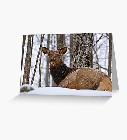 Female Elk Greeting Card