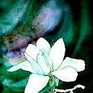 magnolia love by cristina