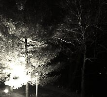 Winter Solstice Evening Trees 2014 by Candace77