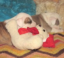 Not A Puppy Was Stirring ~ by Ginny York