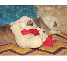 Not A Puppy Was Stirring ~ Photographic Print