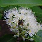Bee utiful by Tracy A Smith