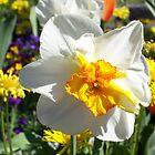 White flower by daffodil