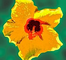 Painted Hibiscus by Margaret Stevens