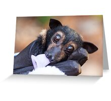 Kuro - Orphan Spectacled Flying-fox Greeting Card