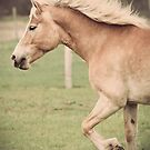 Haflinger Horse by jamieleigh