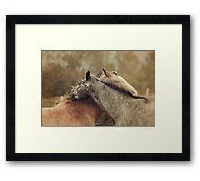 Equine Scratches Framed Print