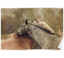 Equine Scratches Poster
