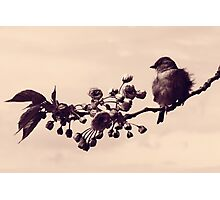 Flowered Finch Photographic Print