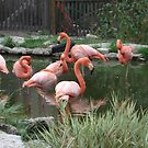 Flamingo Haven by Becky Hartin