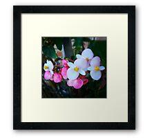 Pink Angels Framed Print