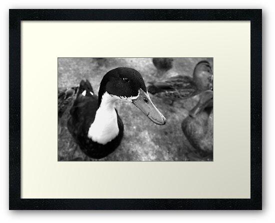 Mono Duck by Janine  Hewlett
