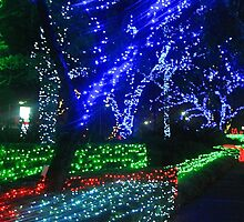 Christmas Light Blur by Penny Smith