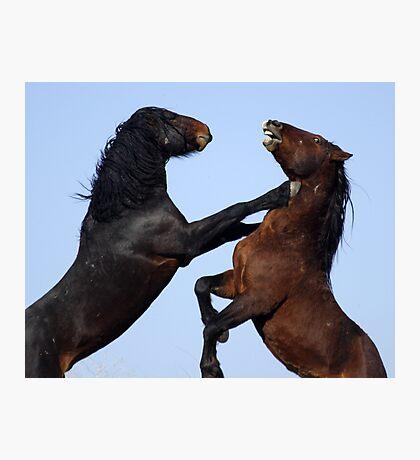 Stallion Joust Photographic Print