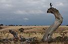 Vale Yuroke Tree by Georgie Hart