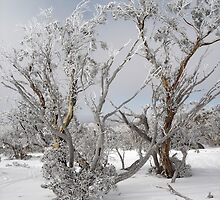 Snowgums overlooking Pretty Valley, Perisher by Det Voges