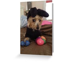 Teacup Yorkie Greeting Card