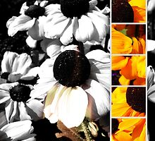 Monochrome and Yellow Black-eyed Susans by stine1