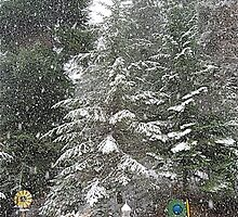 HEAVY SNOW WARNING by YELLOWJACKET