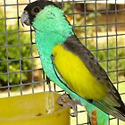 HOODED PARROT. by the6tees