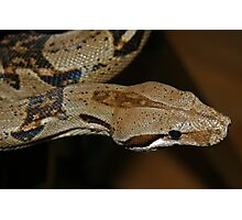 Slithering Snake Photographic Print