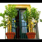 Lemon Trees by pault55