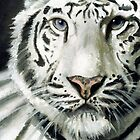 White Tiger by Pia  Hiki