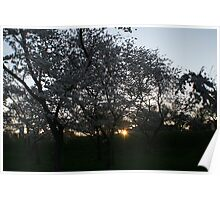 Cherry Blossom Sunrise Poster