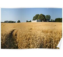 A Path in the Golden Wheat Field Poster
