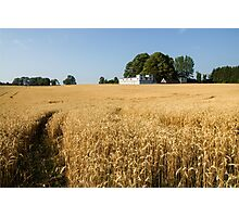 A Path in the Golden Wheat Field Photographic Print