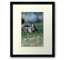 """Chat - Cat """" Tchink boom"""" 03 (c)(t) ) by Olao-Olavia / Okaio Créations 300mm f.2.8 canon eos 5 1989  Framed Print"""