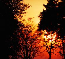 Evening Glow by madman4