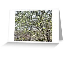 Hawthorn today 29th March Greeting Card