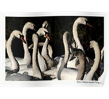 Swans in the Frame  Poster