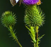 Butterfly on a Purple Wildflower by BLaskowsky