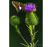 Butterfly on a Purple Wildflower Photographic Print