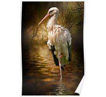 European Stork Poster