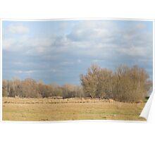Floodplain Forest Landscape Poster