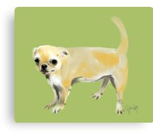 Chihuhua Harry Canvas Print