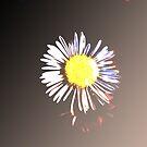 Daisy by Ratfingers