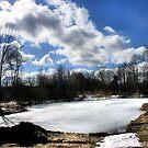 South Pond by shellyb