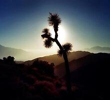 Desert Rose by BMV1