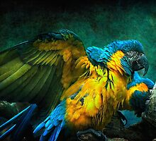 The Macaws by Tarrby