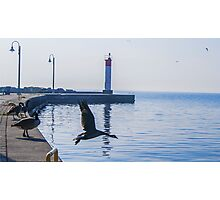 Bird Leaving Peer Photographic Print