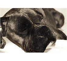 Dark brindle boxer in dreamland Photographic Print